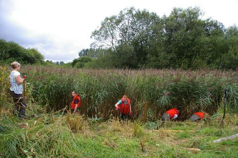 Pond work at chorlton meadows sacv for Pond reeds for sale