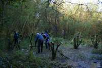 SACV coppicing at Sale Water Park i