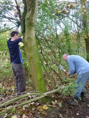 Hedgelaying by the Bowdon Bollin iv