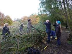 Hedgelaying by the Bowdon Bollin v