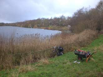 1 - SACV - reed beds in Chorlton Water Park