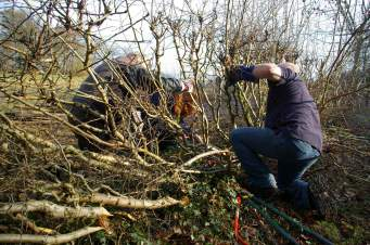 SACV - Alderley Edge hedgelaying 13-01-2013 12-20-42