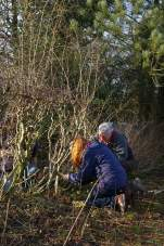SACV - Alderley Edge hedgelaying 13-01-2013 12-21-32