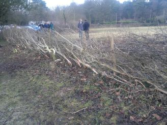 SACV - Alderley Edge hedgelaying 13-01-2013 14-47-23