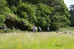 Conservation volunteers at work