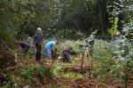 Woodland work at Birch MossCovert