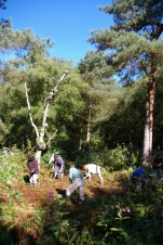 Woodland work at Birch Moss Covert