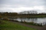 After clearing self-seeded trees at lake edge2