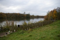 After clearing self-seeded trees at lake edge