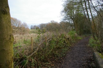 Last year's hedgelaying
