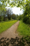 The widened path andcowslips