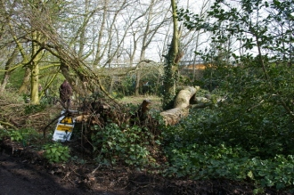 Woodland management at Priory Gardens