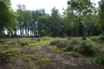 The return of heathland