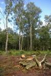 Woodland making space forheathland