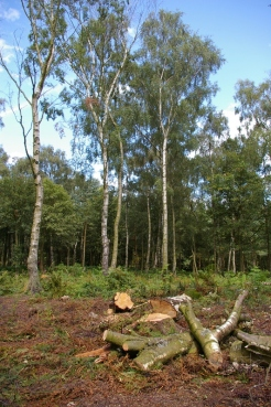 Woodland making space for heathland