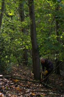 Volunteer at work in the woods 1