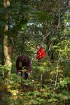Volunteers at work in the woods1