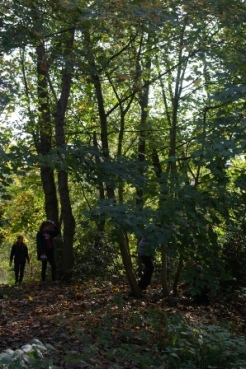 Volunteers at work in the woods 2