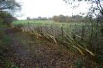 The laid hedge1