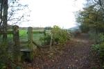 The laid hedge2