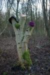 Hats on tree