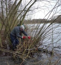 Cutting the willow