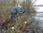 Weaving cut willow in to form the newgroynes