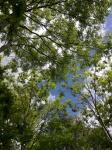 The sky through thetrees