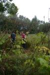 Volunteers tackling Himalayanbalsam