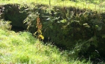 The overgrown wall1