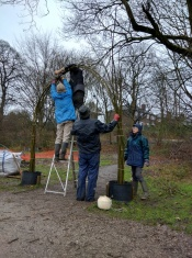 Starting the willow arch