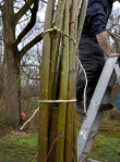 Working on the willow arch3