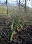 Cut wood for a habitatpile