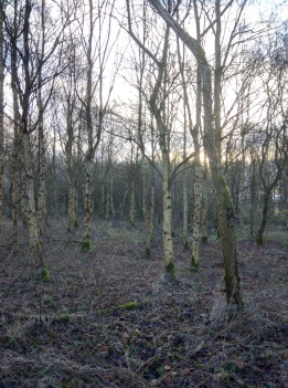 Winter woodland 3
