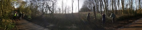 Panorama of hedgelaying in action