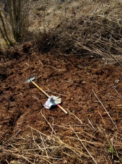Cleared bracken litter
