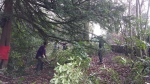 Volunteers clearing rhododendron 1