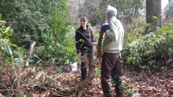 Volunteers clearing rhododendron 2