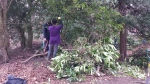 Volunteers clearing rhododendron 3