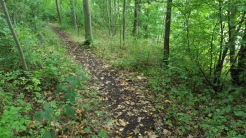 The path before maintenance