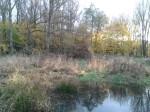 the-pond-1