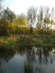 the-pond-2