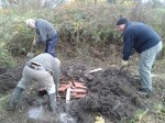 volunteers-working-on-hibernaculum