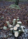 a-coppiced-tree