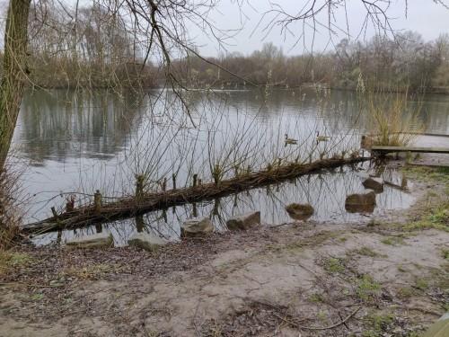 Established willow groyne