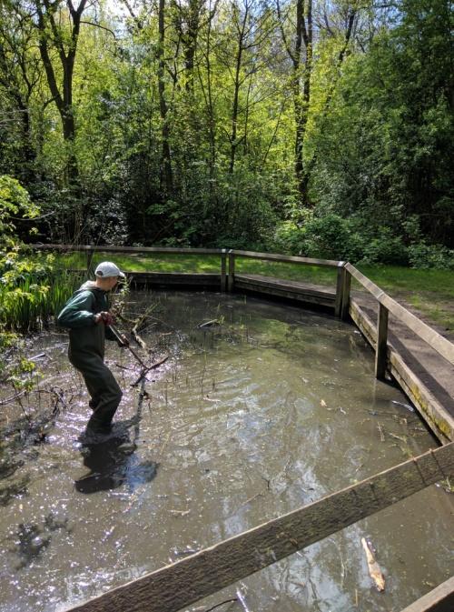 Volunteer clearing debris from pond