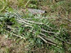 Slow-worm habitat pile