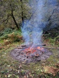 Bonfire of rhododendron