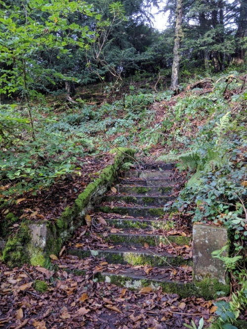 Steps at Errwood Hall