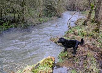 Dog exploring